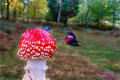 Fotografiando setas y fotografos. (loriagaon) Tags: sonydscrx10iii sonyrx10lll rx10lll galicia pontevedra espaa loriagaon loria plantas plants naturaleza nature setas mushrooms otoo autumn macro