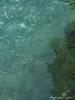 IMG_7428 (by_Stella) Tags: athens greece travel travelling traveling keeptravelling enjoy world europe athena lake hobby love vouliagmeni swim swimming cat ninelives kitty streetcat cats food foodie greekfood greek summer summernight