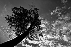 Aiming For The Moon (Anna Kwa) Tags: tree silhouette sky clouds perspective shenandoahnationalpark virginia usa annakwa nikon d750 afszoomnikkor1424mmf28ged my up always aim moon forest seed pain life bewell neversaynever seeing heart soul throughmylens travel world coldplay upup beyou