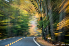 -20161021Cape Cod n New Hampshire255 (Laurie2123) Tags: fallcolors laurieturnerphotography laurie2123 newhampshire green motionblur yellow zoomeffect 52 weeks 2016