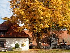 Herbstfarben (Paramedix) Tags: baum herbst fall autumn germany deutschland badenwrttemberg olympus em5 mft colorful farbig kloster kirchberg monastery