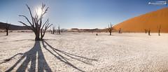 Dead Vlei (dieLeuchtturms) Tags: 21x9 235x100 7x3 africa afrika deadvlei dünen hardap kameldorn namib namibnaukluftnationalpark namibia panorama sandwüste spiegelkugel vachelliaerioloba wallpaper wüste desert mirrorball sanddesert sossusvlei