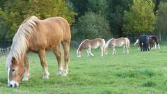 Pferde bei Groß-Winternheim
