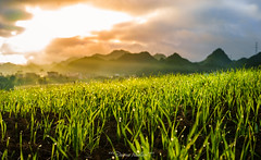 Sun (tuanduongtt8018) Tags: vietnam nature naturallandmark green sun sunlight light ray mountain explore