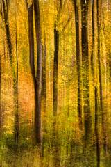 Artistic Forest Swipe 3-0 F LR 11-1-16 J212 (sunspotimages) Tags: artwork artistic nature trees tree impressionist impressionism misc fall digitalmanipulation