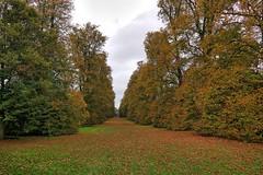 UK, Suffolk,  Nowton Park (Nik Morris (van Leiden)) Tags: uk england suffolk fall autumn herfst tress colour countryside nx30