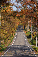 Autumn road (z.dorighi) Tags: autumn fall poland road up trees golden leaves yellow colorful through street