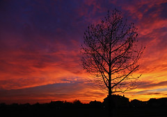 Welcome December (Robyn Hooz) Tags: tramonto sunset december padova casa albero cielo sky clouds nuvole rosso
