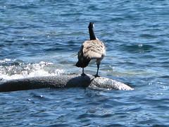 Lake Tahoe NEVADA 048 (listerdouglas) Tags: sandharbor nevadastatepark laketahoe