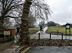 Rainy Heath (Dun.can) Tags: hampsteadheath hampstead london nw3 trees parliamenthill umbrella rain
