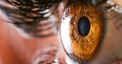تصاویر ماکرو از چشم انسان (وبگردی) Tags: انسان چشم عکاسیماکرو عکس ماکرو