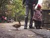 Little Red Riding Hood in the park (A_Peach) Tags: berlin g3 park autumn rotkäppchen littleredridinghood duck ente panasoniclumixg3 panasomiclumixf1720mm rain street apeach anjapietsch mftm43lumixpanasonic microfourthird