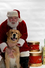 Photo by Dolores Hamilton  (55) (Humane Rescue Alliance) Tags: hra humanerescuealliance holiday photos pet cat dog santa animals