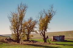 Anyway The Wind Blows (Pedalhead'71) Tags: endicot washington palouse barn landscape abandoned