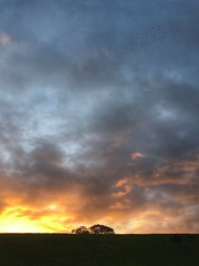 Lapwings at dawn. (Wizard Snaps) Tags: sunsetsunrise