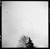 Lauttasaari scenery (danieltim.net) Tags: finearts photography blackandwhite ilford film delta100 rendition tones contrast grey skies birds atmosphere mood composition autumn helsinki lauttasaari