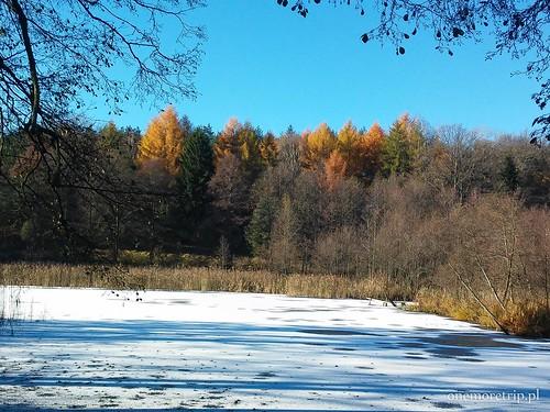 161112-115151-luboradza lasy