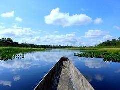 . @Regrann del da para @seecolombia - San Jos del Guaviare, Guaviare, Colombia - Laguna Negra, just outside San Jos del Guaviare, is a blackwater lake, meaning that, when it's still, it acts as a perfect mirror for the sky #Colombia #colombiaismagicalr (EnMiColombia.com) Tags: foto regrann del da para seecolombia san jos guaviare colombia laguna negra just outside is blackwater lake meaning that when its still it acts perfect mirror for sky colombiaismagicalrealism colombian colombiano colombiana lovescolombia travelcolombia explorecolombia offthebeatenpath igerscolombia igcolombia southamerica discoversouthamerica visitsouthamerica earthpics earthfocus travelblog travelphoto sanjosedelguaviare lagunanegra amazon amazonia surreal nofilter