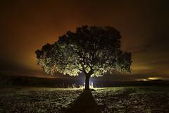 Ente luminoso (Antonio Martnez Toms) Tags: nocturna noche fotografanocturna contraluz encina