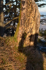 2.12.16. Winke winkee. (dreistrahler) Tags: 21216aufdemruchenblchen eapspotter lynx luchs langeerlen luxia molishunter swissarmy baselland fcbasel huenerchopf 51116frauenfcbderendingen 129air39fribourg zoobasel zrhairport 111016zoolibasel air14 airkappelench