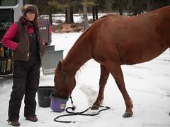 Horse and Owner (David R. Crowe) Tags: animal equidae horsebackriding landscape mammal mountain mountainscrambling nature outdooractivities scrambling turnervalley alberta canada