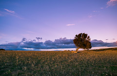 Dry Fields (Athrandel) Tags: land landscape landscapes nature green tree trees sky skies cloud clouds infra infrared ir colour colours colors colorful dramatic mood field fields