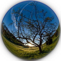 Baum Fisheye Breiten (Bugtris) Tags: 815f4l sunrise 5dmkiii baum landschaft fisheye canon