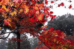 (Peapotty) Tags: 28mm canon eos m5 f35 fall orange  miyakigun sagaken japan