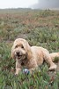 Buddy_02_FortFunston_Oct2016 (JD's Images) Tags: fortfunston dogwalking dogs