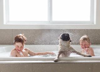 Rub-a-dub-dub there's a pug in my tub!