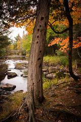 Woodpecker Tree (nikons4me) Tags: autumn up mi woodpecker fallcolor michigan overcast holes trail upperpeninsula kakabikafalls sonye1855mmf3556oss sonynex7