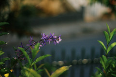 (Ana Caprini) Tags: flowers flower canon bokeh juizdefora canoneosrebelxti