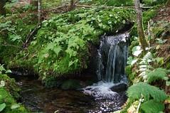PETITE CHUTE PRÈS DU RUISSEAU TINTIN (Yvan Boudreault) Tags: landscape waterfall eau paysage cascade chute
