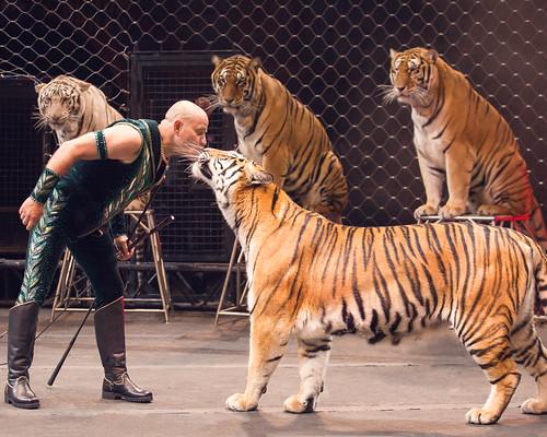 circus 4