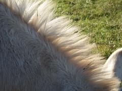 DSCF8514 Parco Nord - Una fattoria! Criniera d'Asino (Franz Maniago) Tags: tori cavalli toro mucche asinello asini bovini animalidomestici animalidafattoria animalidigrossataglia