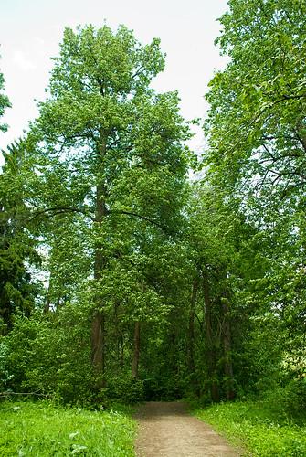 Serednikovo forest ©  Andrey