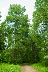 Serednikovo forest (akk_rus) Tags: nikon europe russia nikkor  moscowregion d80 serednikovo 18135mm   nikond80 18135mmf3556g afsnikkor18135mm13556ged