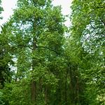 Serednikovo forest thumbnail