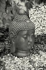 Garden Buddha (EJ Images) Tags: uk england bw slr monochrome face statue garden mono blackwhite suffolk nikon head buddha d750 serene meditation dslr eastanglia 2015 nikonslr exoticgarden nikondslr henstead 24120mmlens hensteadexoticgarden ejimages nikond750 dsc2750c1