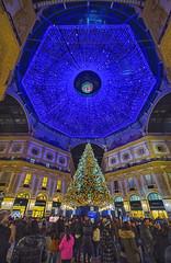 La Galleria a Natale (Fil.ippo) Tags: christmas milan tree night milano albero natale filippo notturno sigma1020 galleriavittorioemanueleii d7000 filippobianchi