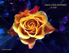ROSE for PEACE, LOVE and HAPPINESS in Year 2016 (swetlanahasenjger) Tags: simplysuperb flowerarebeautiful saariysqualitypictures thebestofmimamorsgroups contactgroups fleursetpaysages frommetoyouwithlove sunrays5 onlythebestofflickr