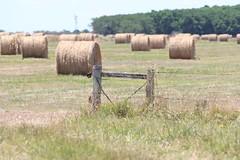 (Maribel Otero) Tags: farm tranquera grassrolls