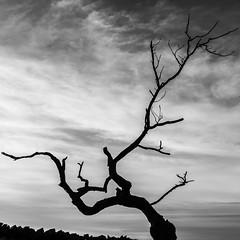 Dead tree (alanrharris53) Tags: bradgatepark bradgate tree dead autumn winter sky sillouette