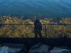 yer humble camera operator (carbonated) Tags: portsmouthnh water fence seaweed reflection allison selfportrait sortof