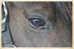 Flora (gill4kleuren - 12 ml views) Tags: horse stable flora