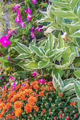 _DSC0121-HDR (johnjmurphyiii) Tags: 06416 connecticut cromwell hdr hillside originalnef scovill summer tamron18270 usa bracket flowers johnjmurphyiii