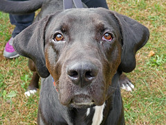 Charlie_01 (AbbyB.) Tags: mtpleasantanimalshelter animalshelter easthanovernj newjersey adopt rescue shelter pet shelterpet petphotography dog canine