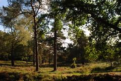 Rozendaal en omg 161001 028 (KB3680) Tags: bos rozendaal gelderland nederland veluwe veluwezoom nationaalpark