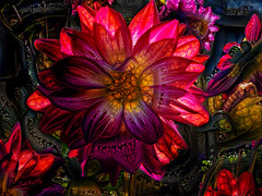 Strolling Through a Chemical Garden (Steve Taylor (Photography)) Tags: psychedelic art abstract black green red yellow mauve purple eerie weird crazy mad odd strange newzealand nz southisland canterbury christchurch plant flora flower bud dalia lines texture autumn