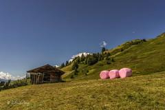 Pink Balls (Claudia Bacher Photography) Tags: pink ballen balls berge mountain himmel heaven alp graubünden fatschél hochwang landschaft landscape outdoor schweiz suisse switzerland sonya7r schanfigg